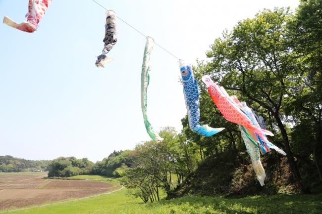 続日本100名城になった本佐倉城跡、国史跡指定20周年を記念して若葉に昇る色鮮やかな鯉たち(5月13日まで)